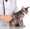 Ветеринарные клиники в Серпухове